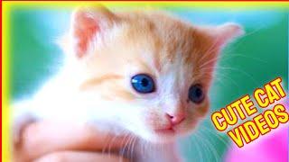 Cute Cat Videos 2021 #8  Funny Cat Videos 2021  Kitty