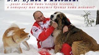Путин и животные. Видео.