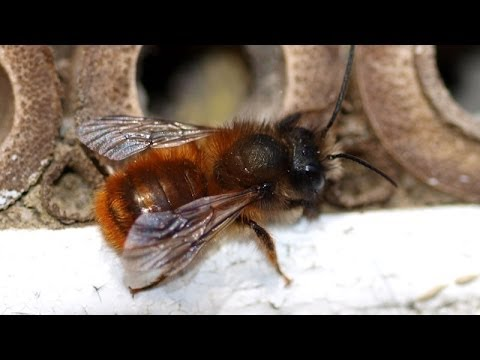 How I build my Mason Bee Hives