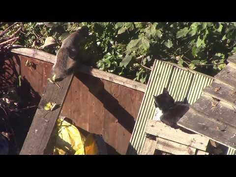 Cat attacks squirrel in tense encounter