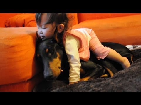 Funny Dogs and Babies Compilation 2018 - Doberman playing with Baby