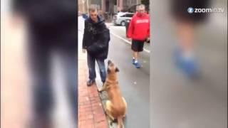 Mit diesem Hund müssten Sie keine Verbrecher fürchten