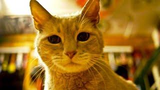 Этот кот 20 лет был мэром одного американского городка
