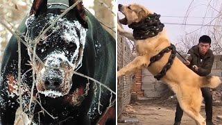 7 كلاب تتفوق على البيتبول يجهلها الكثيرون..!!