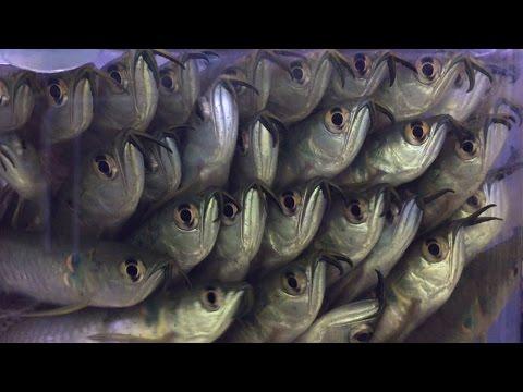 My Favorite Fish Store