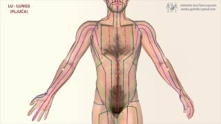 Chinese Acupuncture Meridians
