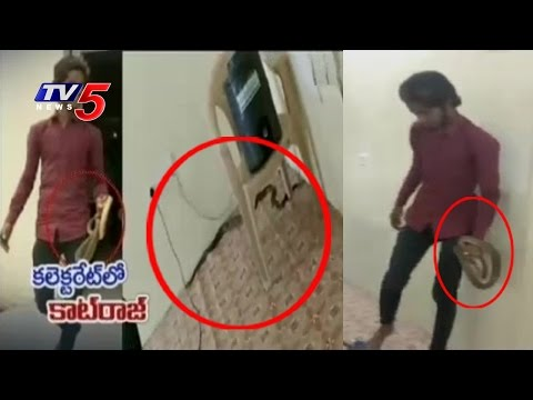 Snake Found in Peddapalli Collector Office | Telugu News | TV5 News