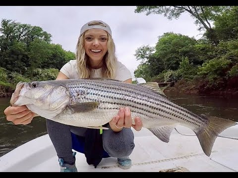 EPIC STRIPED Bass FISHING In RIVERS And CREEKS For GIANTS!