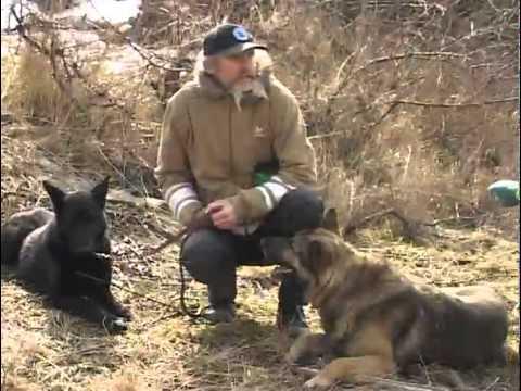 видео: Как защититься от нападения собаки?