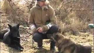 Как защититься от нападения собаки?(http://objectiv.tv/190311/53906.html - Как защититься от нападения собаки? В Харькове решили прививать правила обращения..., 2011-03-21T12:35:28.000Z)