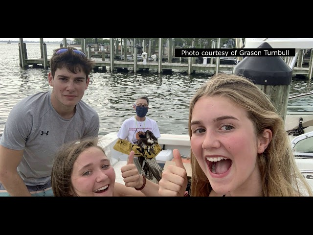 Chesapeake Osprey Rescue