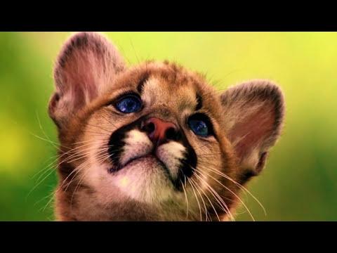 beautiful romantic guitar music youtube. Black Bedroom Furniture Sets. Home Design Ideas