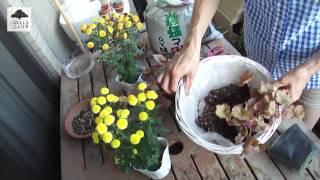 園芸家の杉井志織さんによる、ヒューケラの寄せ植えです。ヒューケラを...