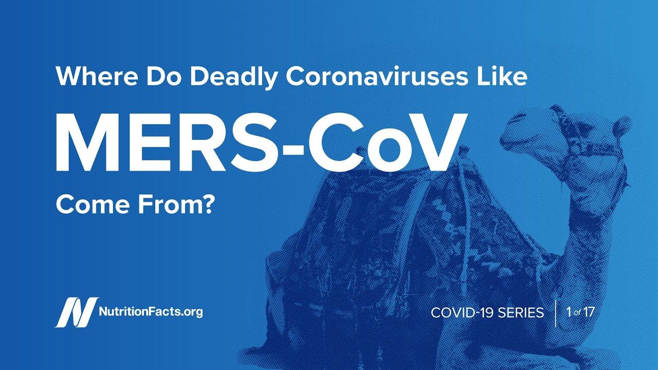 Where Do Deadly Coronaviruses Like MERS-CoV Come From?