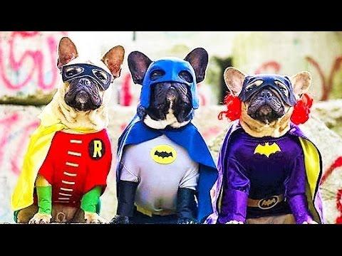 40 BEST Halloween Costumes for Pets & 40 BEST Halloween Costumes for Pets - YouTube