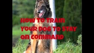 Dog Training Basics  How To Train Your Dog To Stay On Command