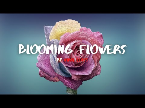 4K Blooming Flowers Time Lapse Video | No Copyright Music
