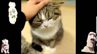 zacebook youtube funny videos animal compilation funny videos www com funny cat noises