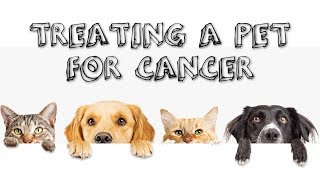 Treating a Pet for Cancer