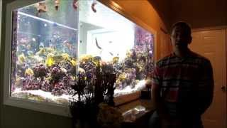 Our Natural Sun Lit Reef 2 Year Update July 2013