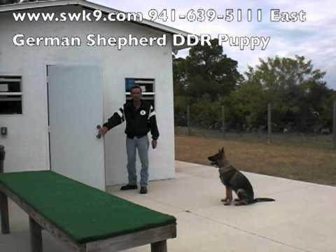 southwest-k9-academy-teaching-my-dog-how-to-go-in-the-door