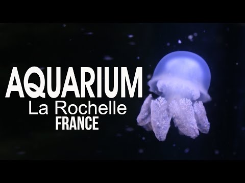 Aquarium de La Rochelle, France