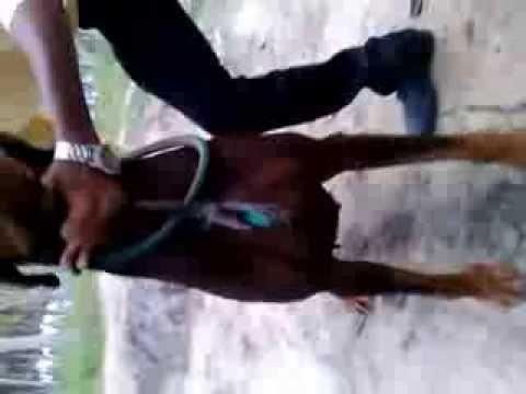 My Male Doberman (Bruce)Son of shiva de black shadow-Ranipet,vellore