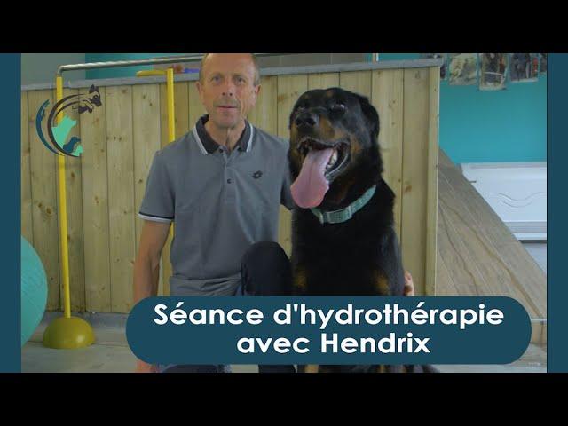 Hydrothérapie avec Hendrix   Clinique vétérinaire Saint Roch