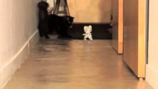 Эти удивительные смешные кошки funny cat №1 Смешные приколы с кошками1