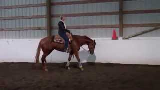 cha cha margarita aqha june