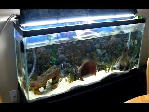 No maintenance 55 gallon aquarium low upkeep planted for Low maintenance fish tank