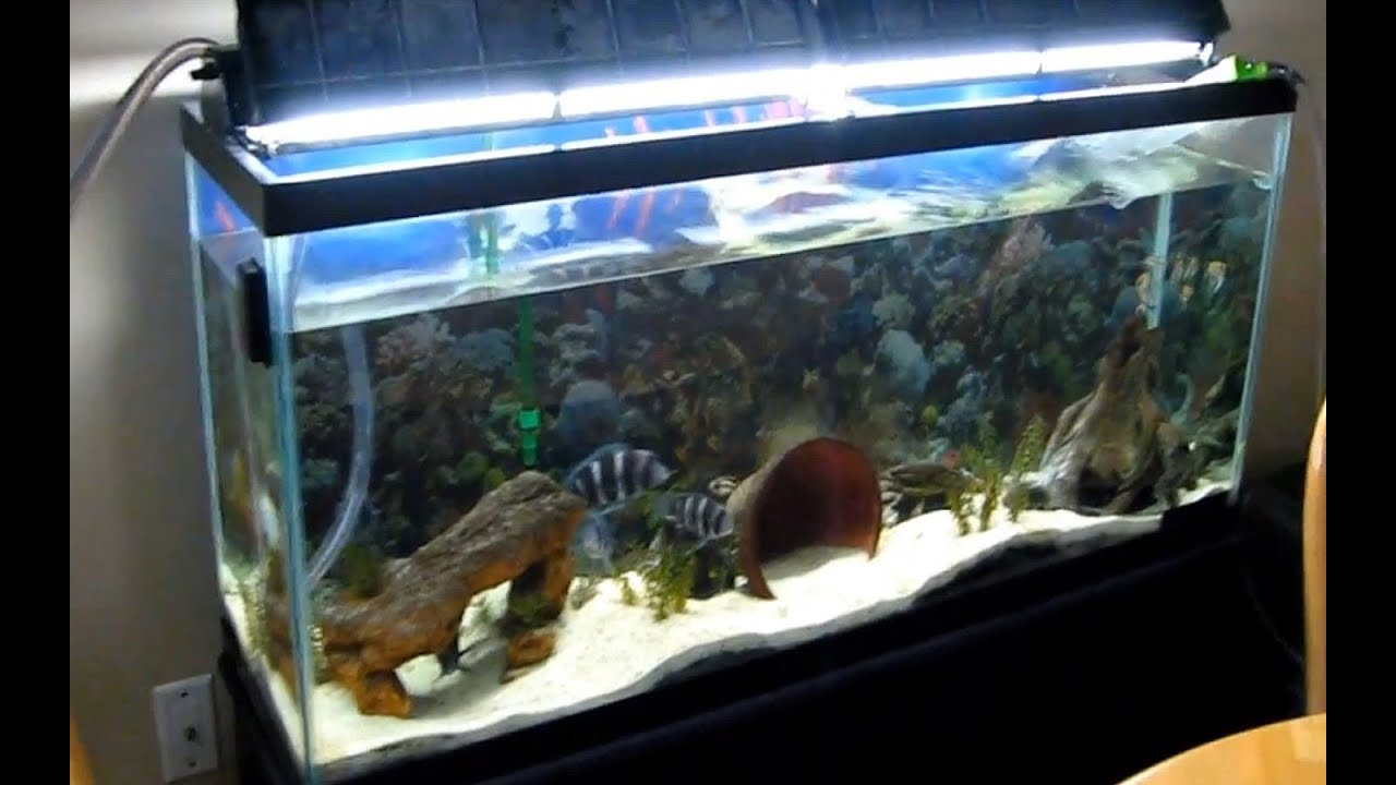Cleaning and flushing 55 gallon aquarium youtube for 55 gallon aquarium decoration ideas