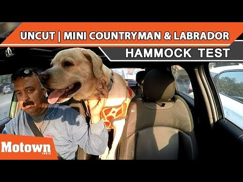 Mini Countryman Labrador Uncut Version Hammock Test Motown