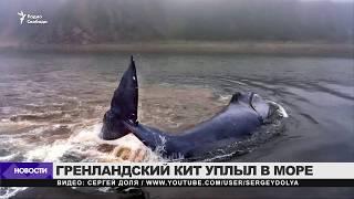 Кит освободился и уплыл из Хабаровского края