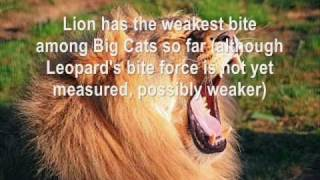 Top 15 Strongest Animal Bite Forces!