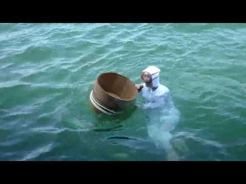 Ama divers in Mikimoto