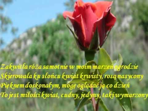 Wiersz Róża Piotr Rybiński Youtube