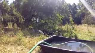 Avery Schlatter Ducks playing in water