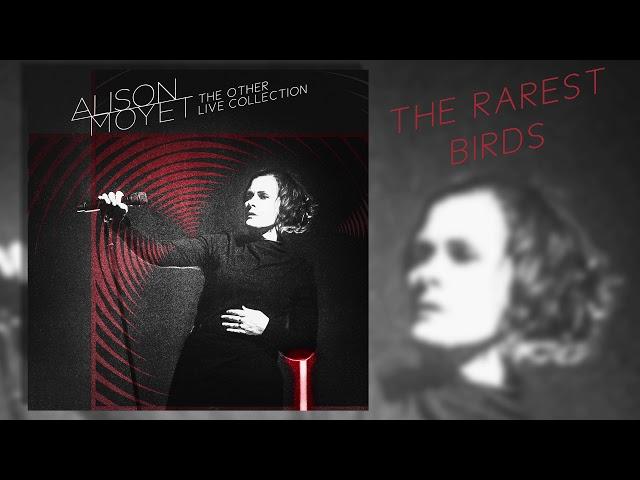 Alison Moyet - The Rarest Birds (Live)