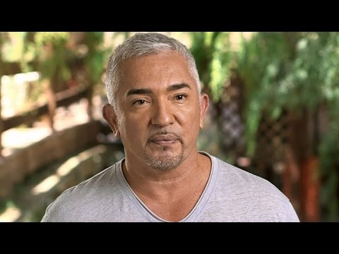 Cesar Millan Rehabs Aggressive French Bulldog on Nat Geo WILD's 'Cesar 911'