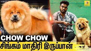 உடம்பு Fullஅ கடிச்சி வெப்பான் : All About Dogs Episode 8 | CHOW CHOW DOG Breed