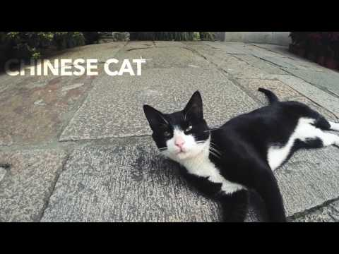 "My asian trip 2014 ""China Thailand Japan"""