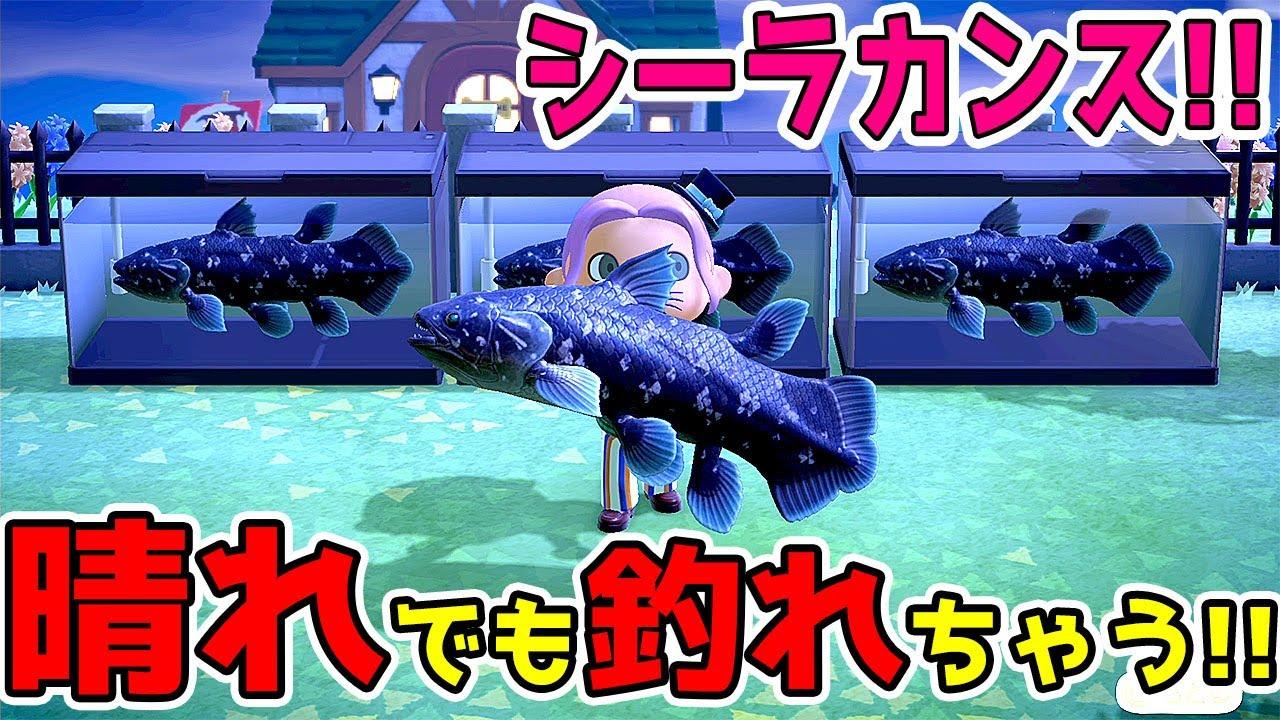 あつまれ どうぶつ の 森 レア 魚