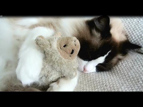 Cute Cat loves his stuffed friends