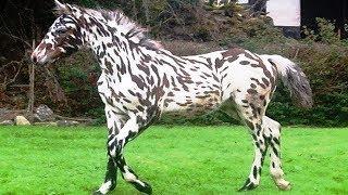 7 Cavalos Com Cores Mais Estranhos Do Mundo