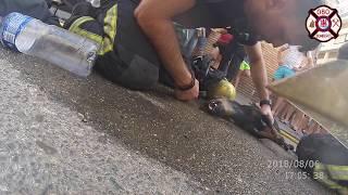 RESCATE DE PERRO EN INCENDIO. BOMBEROS CÓRDOBA