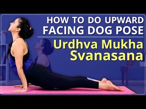 How to do UPWARD FACING DOG POSE   LEARN URDHVA MUKHA SVANASANA In 2 Minutes   Simple Yoga Lessons