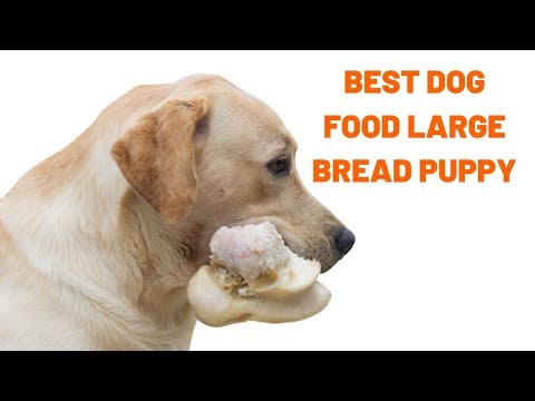 Best Dog Food For Puppies | Best Puppy Food For Large Breeds