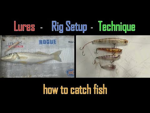 HOW TO CATCH - Whiting on Surface Lures !!!