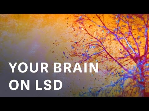 The first modern images of a human brain on LSD